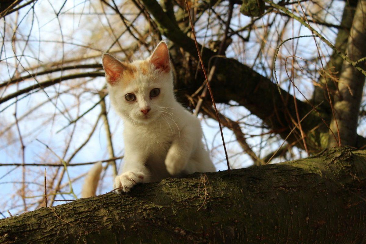 Czym dokarmiać bezdomne koty?